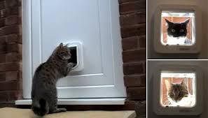 Exterior Cat Door Best Interior Cat Door Will Not Only Let Your Pet In And Out But