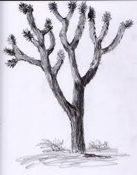 scott u0027s creativity for sanity joshua tree sketch