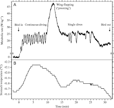 energetic costs of diving and thermal status in european shags