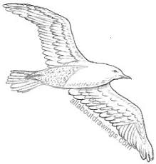 seagull drawing cards pinterest bird drawings and drawing birds