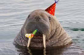 Walrus Meme - party walrus blank template imgflip