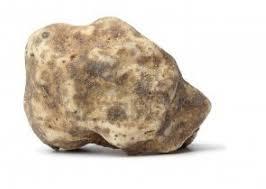 italian white truffle precious italian white truffles tuber magnatum