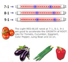 light and plant growth plant growth led grow light strip red blue 660nm 460nm dc12v smd2835