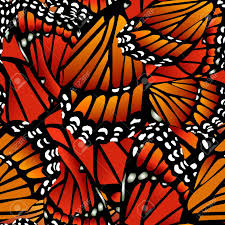 seamless monarch butterfly pattern wings on white royalty free