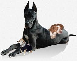 belgian shepherd vs pitbull fight choosing the right dog a veterinarian u0027 perspective