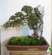 bonsai style landscape penjing three ways to attach a tree to