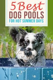 top 7 best dog pools for swimming and cooling down 2017