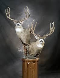 Deer Pedestal Mule Deer Pedestal Mounts Google Search Hunting Pinterest