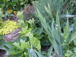 how to use gray and silver plants in your landscape