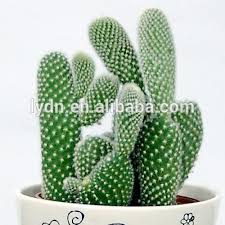 potting mix soil for indoor cactus plant buy potting mix soil