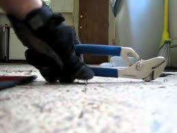 removing staples from hardwood floors