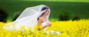 wedding dress cleaning and boxing top most visited stats some interesting reading wedding dress