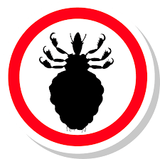 how to get rid of lice complete guide pest strategies