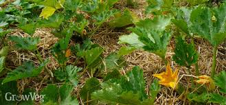 choosing and using mulch in your vegetable garden