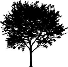 tree silhouette silhouette of tree