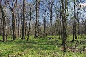Mississippi forest images Lower mississippi river batture reforestation lmrcc jpg