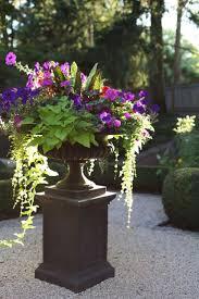 62 best cool season garden color images on pinterest flower