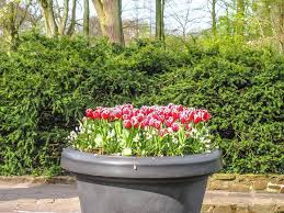 flower garden in amsterdam day trip to keukenhof gettin u0027 spring y with it my wanderlusty