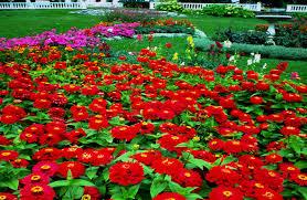a beautiful flower garden choice image flowers bouquet decoration