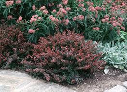 shrubs dooley landscape designs albuquerque backyard landscape