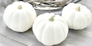 white pumpkins chic white pumpkin fall decor one more time events