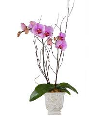 orcid in decorative container