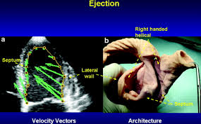 cardiac mechanics revisited circulation