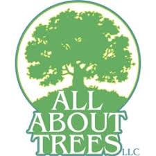 all about trees tree services 55 rd brattleboro vt