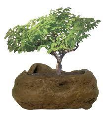 Indoor Rock Garden - bonsai rock garden grow from seed indoor plant off the wall toys