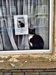 Missing Cat Meme - important seeking missing cat meme collection pinterest cat