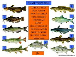 identification of fishes ppt video online download