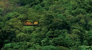 best treehouse resorts in india u2013 zoomcar