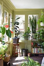 decor plants home natasha and the plant filled sunroom sunroom apartment therapy