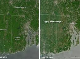Rhode Island forest images Rhode island forests decimated by caterpillars business insider jpg