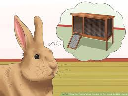 Rabbit Hutch For 4 Rabbits How To Teach Your Rabbit To Go Back To His Hutch 13 Steps