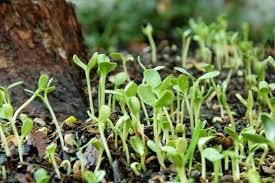 Quote Garden Family Garden Quote Friday U2013 Paul Fleischman Seedfolks Ravenscourt Gardens