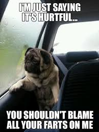 Funny Meme Saying - 25 pug meme jokes that will fill your hearts with happiness