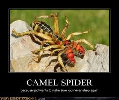 Funny Spider Meme - demotivational posters 32 pics