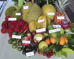 what is a raw food diet it is a rainbow diet live on alive