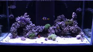Saltwater Aquascaping Quick Update New Aquascape Of The 120 Reef Youtube