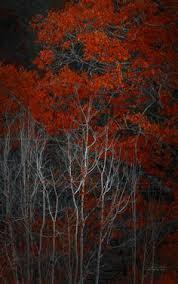 fall colors autumn leaves plumas county northern california