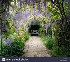 wisteria tunnel stock photos u0026 wisteria tunnel stock images alamy