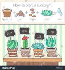 cactus succulents sale banner infographic how stock vector