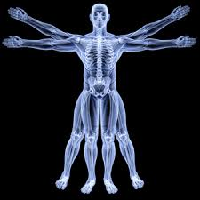 Anatomy And Physiology Place Inspired Anatomy And Physiology Place At Best Anatomy And