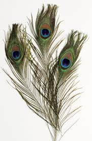 feathers on clipart library tribal feather peacock feathers and