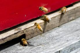 everything you need to know about keeping bees and producing your