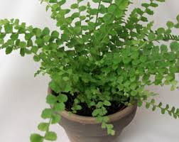 house plants etsy