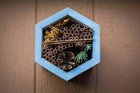 backyard beekeeping blog bee built