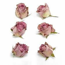 dried roses antique wisteria freeze dried heads petals roses