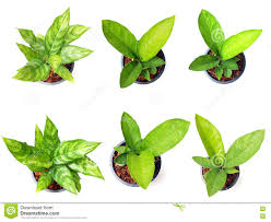 Small House Plants by Small House Tree Top Stock Photos Images U0026 Pictures 1 015 Images